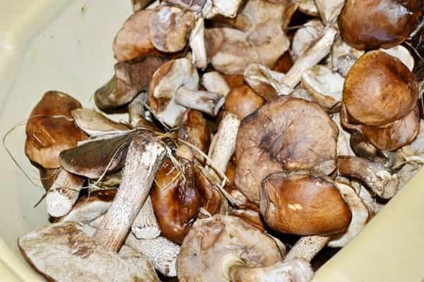 Маринованные лесные грибы